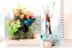 Comment faire un terrarium avec des poissons ?